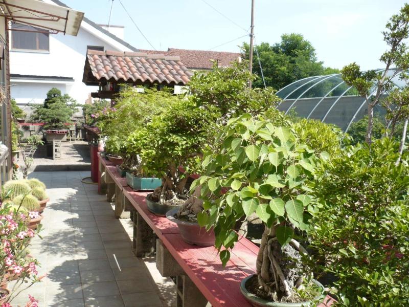 Per gli amanti del bonsai........ P1010430