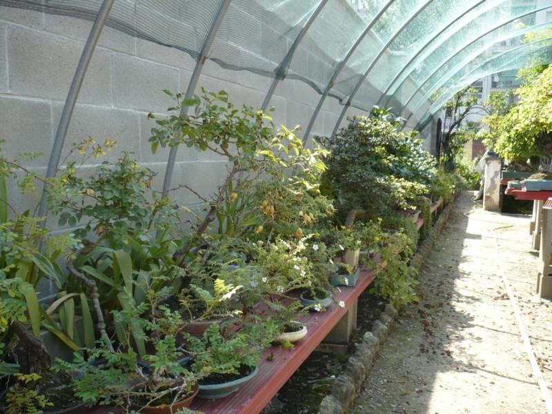 Per gli amanti del bonsai........ P1010434