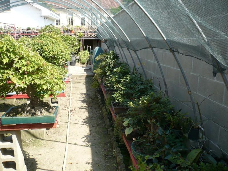 Per gli amanti del bonsai........ P1010437