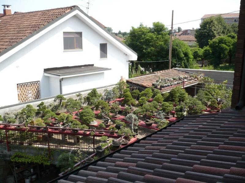 Per gli amanti del bonsai........ P1010438
