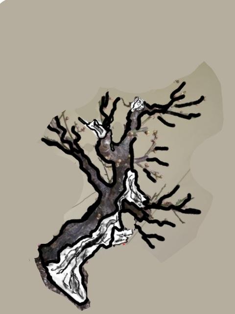 RESTYLING.....Prunus mume. P1020217