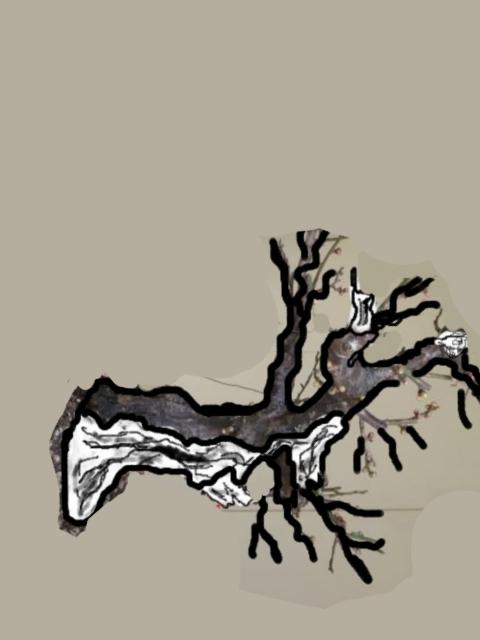 RESTYLING.....Prunus mume. P1020218