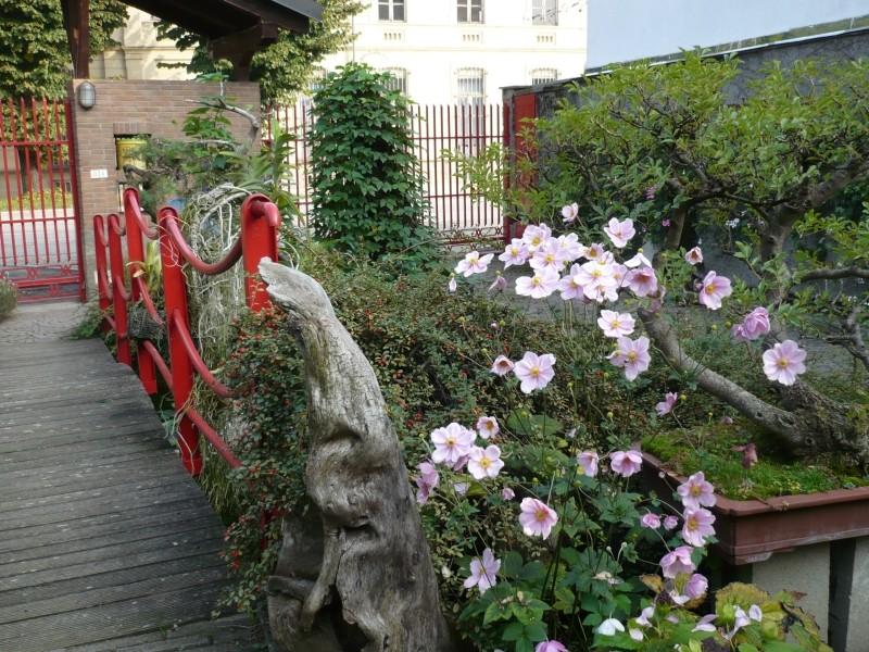 Per gli amanti del bonsai........ P1030417