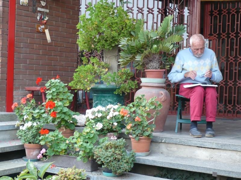 Per gli amanti del bonsai........ P1030418