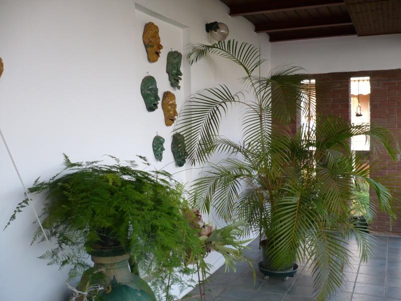 Per gli amanti del bonsai........ P1030510