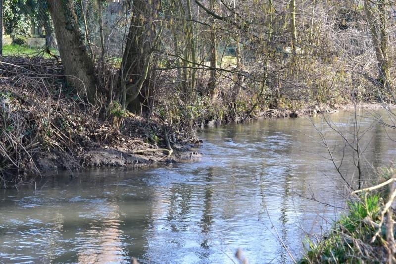 Rivière la Selle Dsc_0113