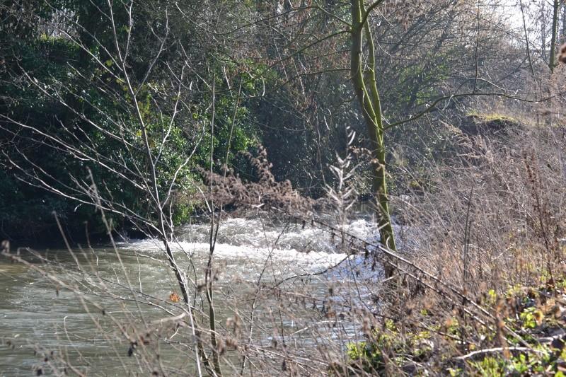 Rivière la Selle Dsc_0114