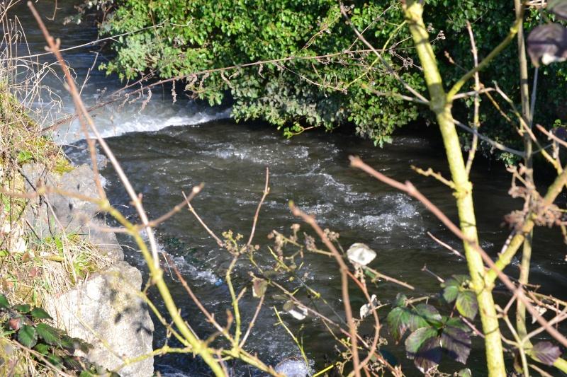 Rivière la Selle Dsc_0115