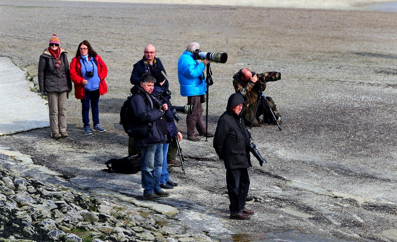 suite 2...photos sortie avec les z'amis de Fotaniflo en baie de Somme  Ok_rv_66
