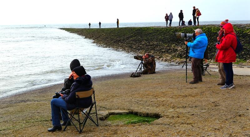 suite 2...photos sortie avec les z'amis de Fotaniflo en baie de Somme  Ok_rv_67