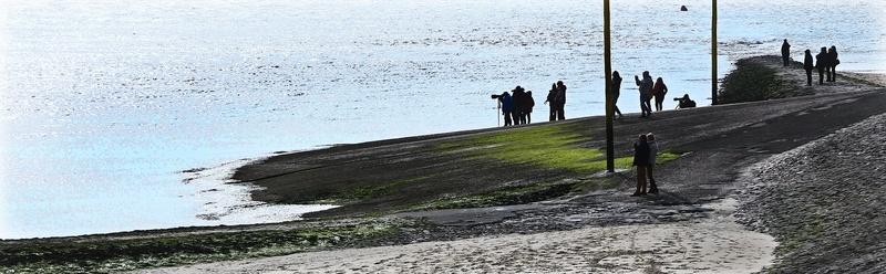 suite 2...photos sortie avec les z'amis de Fotaniflo en baie de Somme  Ok_rv_68