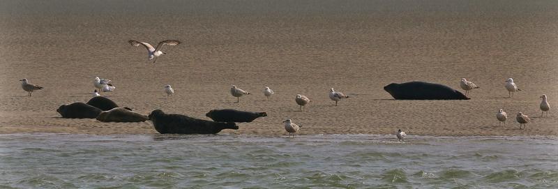 suite 2...photos sortie avec les z'amis de Fotaniflo en baie de Somme  Ok_rv_69