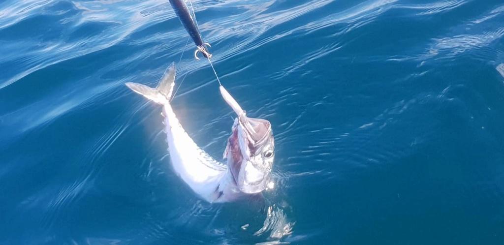 4 juillet avec du fish... 10672010