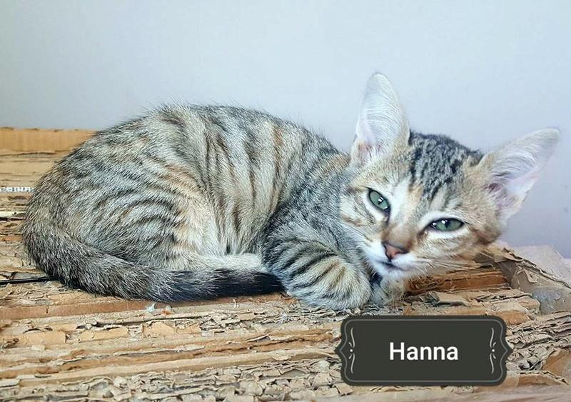 HANNA - TIGREE - ES (Sole) 22855410