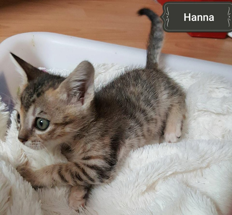 HANNA - TIGREE - ES (Sole) 22855610