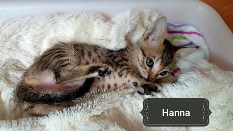 HANNA - TIGREE - ES (Sole) 22883111