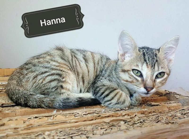 HANNA - TIGREE - ES (Sole) 22883112