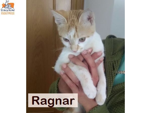 RAGNAR - ROUX ET BLANC - SOLE Ragnar10