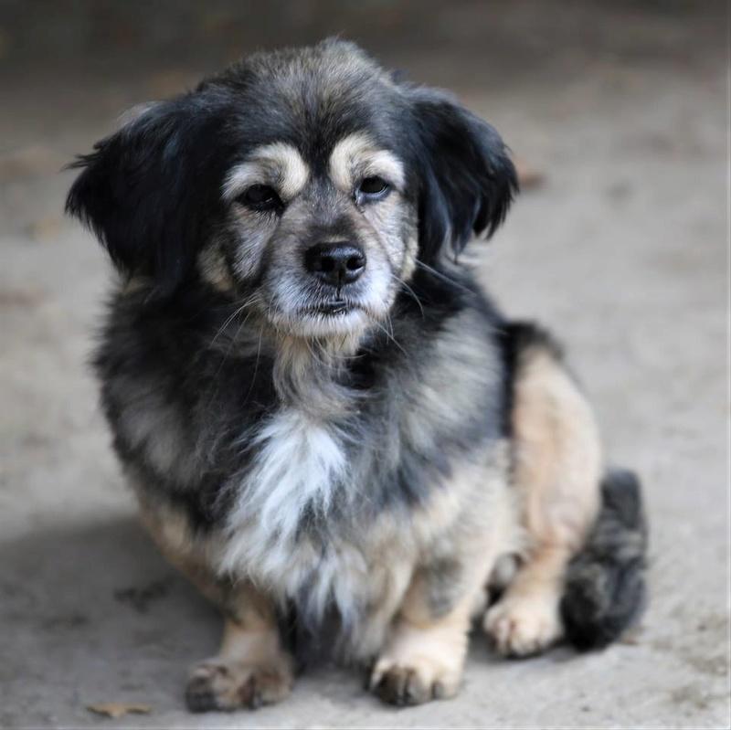 Bobby, chien mâle de petite taille, très clin et sociable  22894910