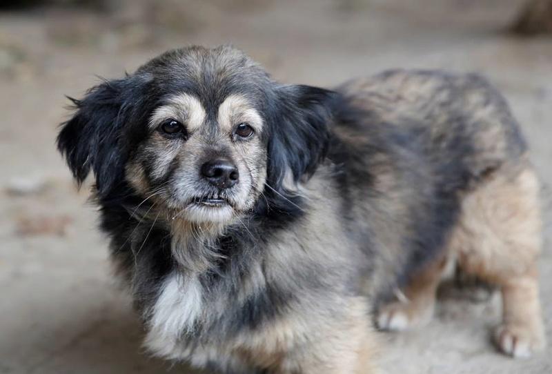 Bobby, chien mâle de petite taille, très clin et sociable  22901510