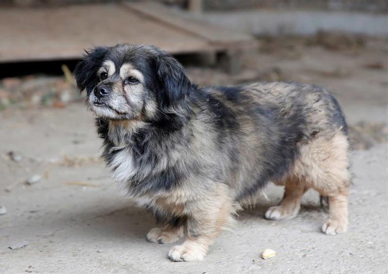 Bobby, chien mâle de petite taille, très clin et sociable  23114610