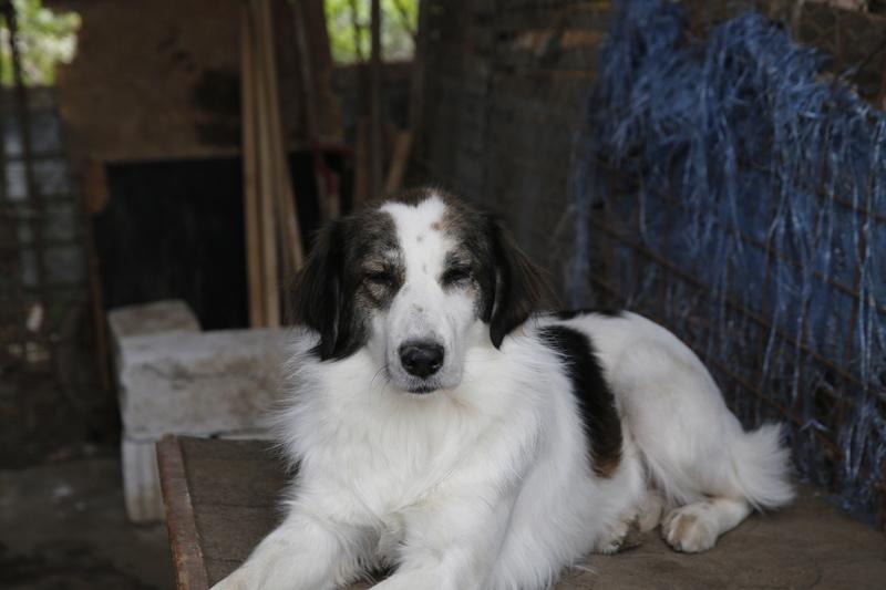 Pumba, chienne née en 2015, taille moyenne-grande _x9a9911