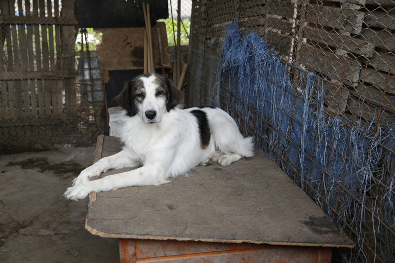 Pumba, chienne née en 2015, taille moyenne-grande _x9a9912
