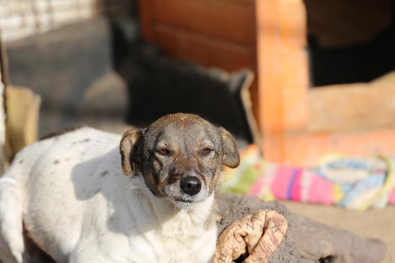 Alba, chienne magnifique, née en 2012 Hx9a2110
