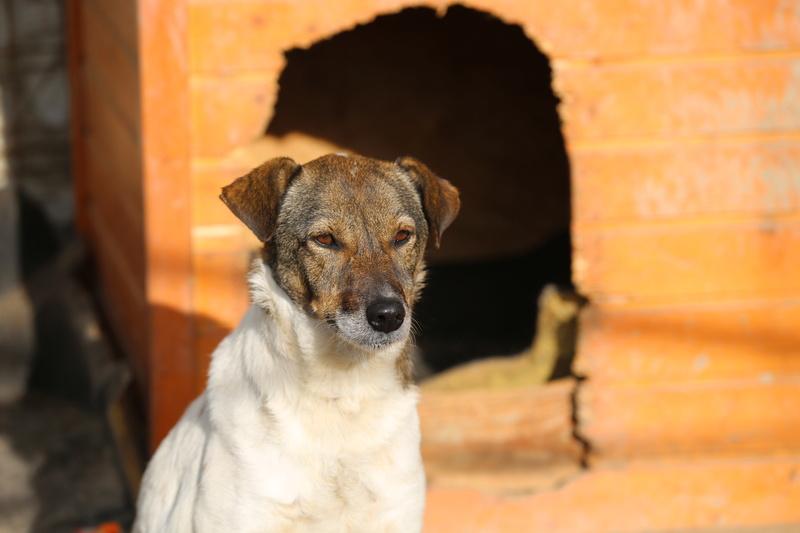 Alba, chienne magnifique, née en 2012 Hx9a2111