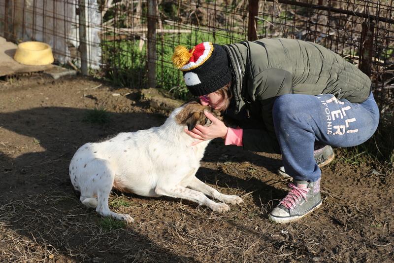 Alba, chienne magnifique, née en 2012 Hx9a2113
