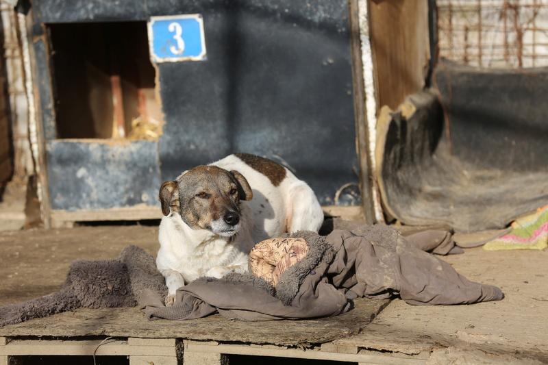 Alba, chienne magnifique, née en 2012 Hx9a2114
