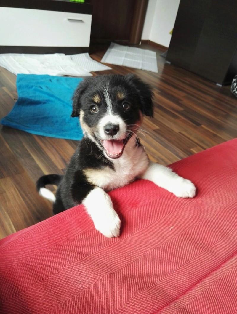 Lumi, petite chienne née en septembre 2017 Lumi11