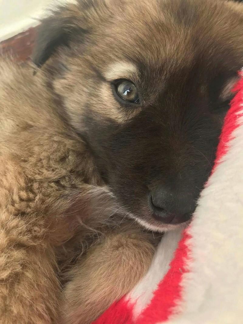 Moka, petite née en septembre 2017 Moka11
