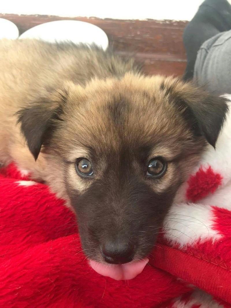 Moka, petite née en septembre 2017 Moka211