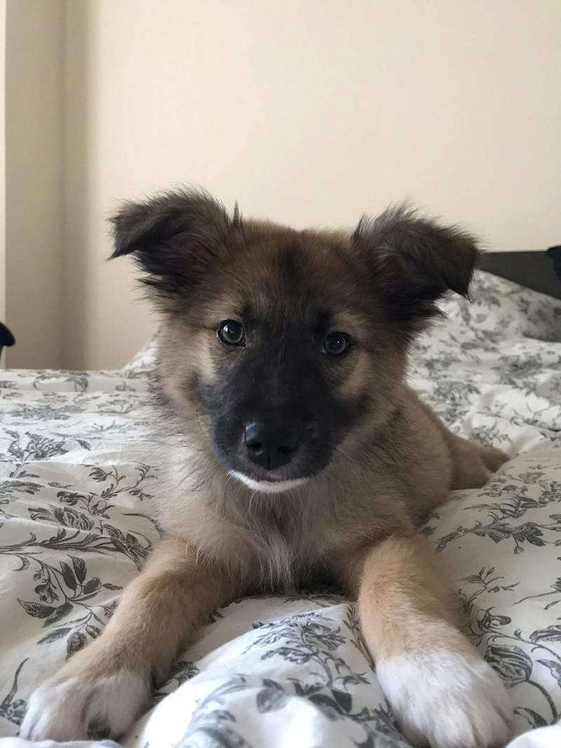 Moka, petite née en septembre 2017 Moka310