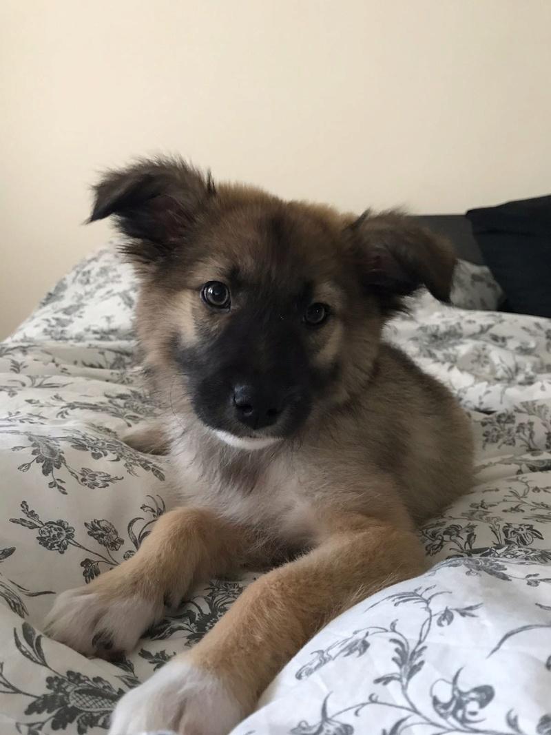 Moka, petite née en septembre 2017 Moka410