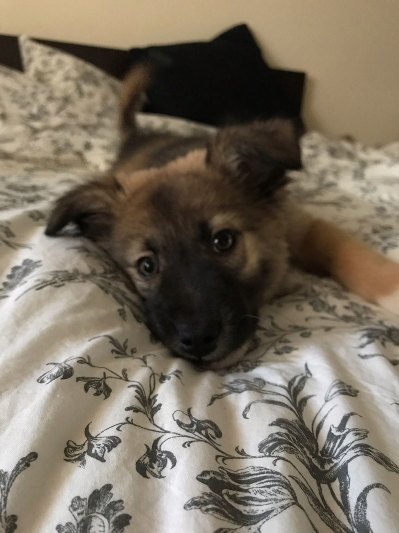 Moka, petite née en septembre 2017 Moka510