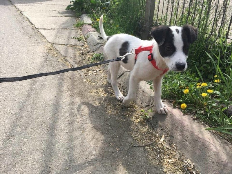 Octavia, femelle née en Janvier 2018 à adopter Octavi13