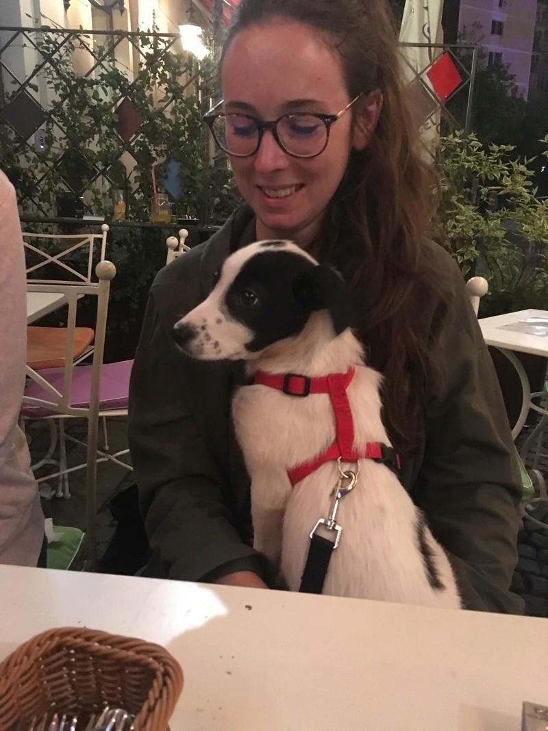 Octavia, femelle née en Janvier 2018 à adopter Octavi14
