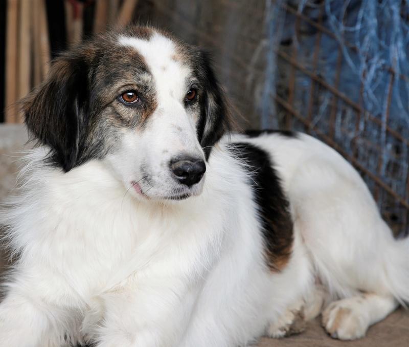 Pumba, chienne née en 2015, taille moyenne-grande Pumba310
