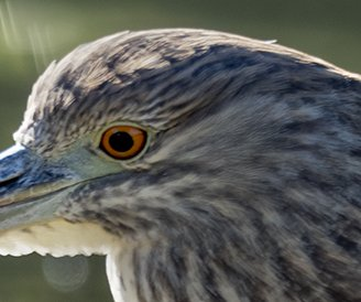 Oiseaux divers [Ajout 2 images 1 mars 2018] 40407311