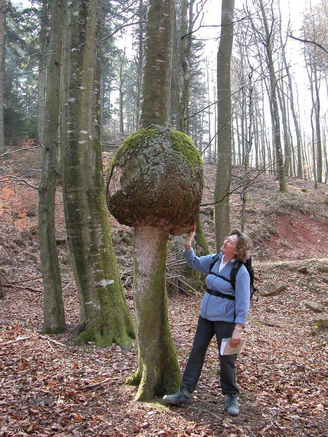 [FIL OUVERT] le bois sous toutes ses formes - Page 6 01042011