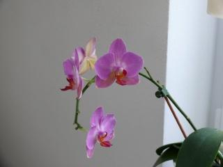 Orchideenblüten 2011 P1090211