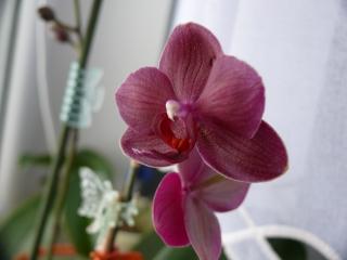 Orchideenblüten 2011 P1090212