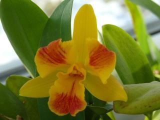 Orchideenblüten 2011 P1090215