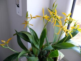 Orchideenblüten 2011 P1090510