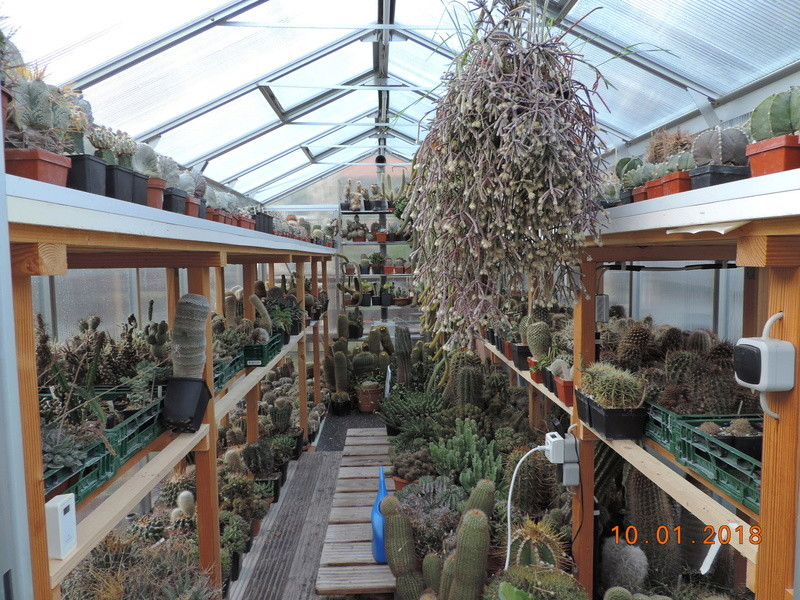 Cacti and Sukkulent in Köln, every day new flowers in the greenhouse Part 184 Bild1103