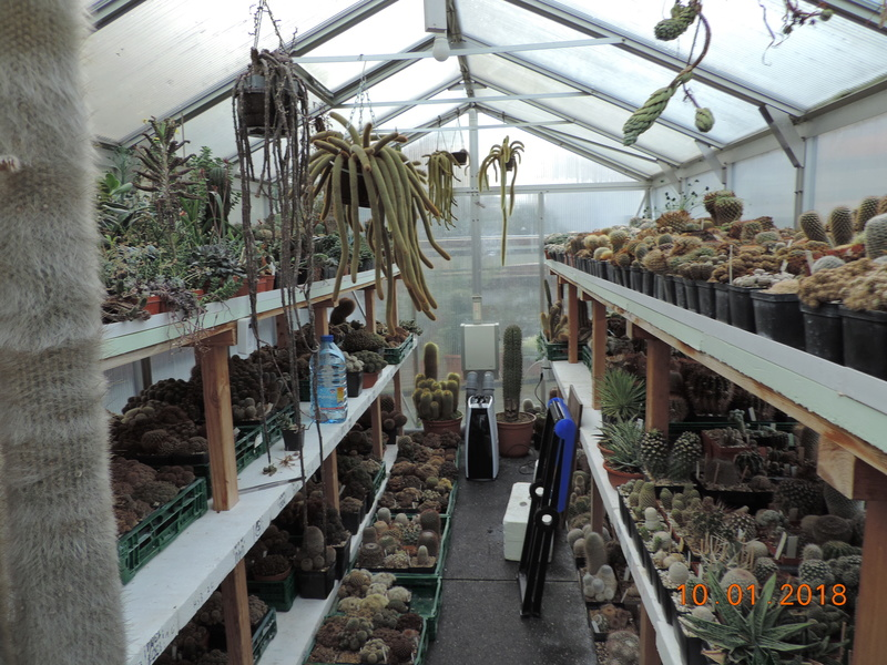 Cacti and Sukkulent in Köln, every day new flowers in the greenhouse Part 184 Bild1109