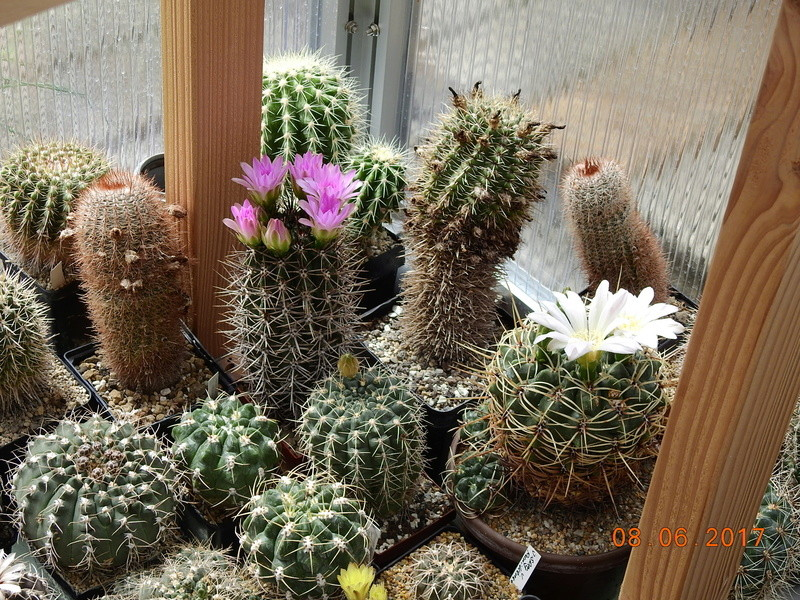 Cacti and Sukkulent in Köln, every day new flowers in the greenhouse Part 184 Bild1121