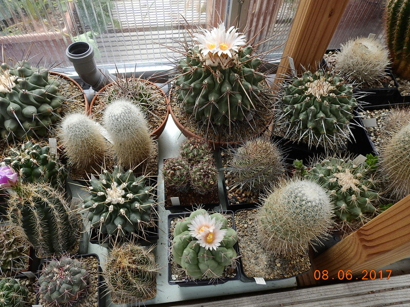 Cacti and Sukkulent in Köln, every day new flowers in the greenhouse Part 184 Bild1140
